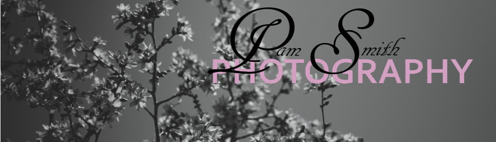 Pam Smith Photography